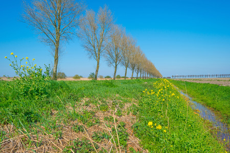 ditch: Ditch along trees in spring Stock Photo
