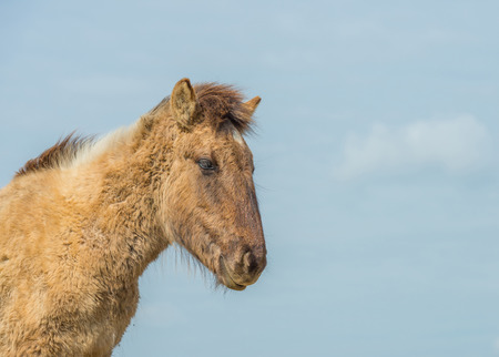 feral: Feral horse in nature in spring