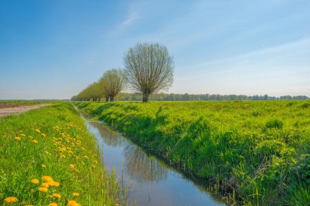 Geknoopte wilgen in zonlicht in het voorjaar