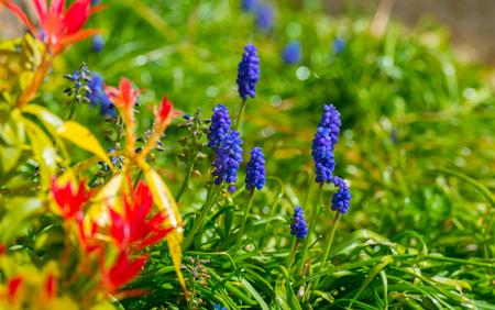 flowering plants: Flowering plants in spring