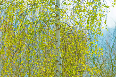 canopy: Green canopy of a tree in spring Stock Photo