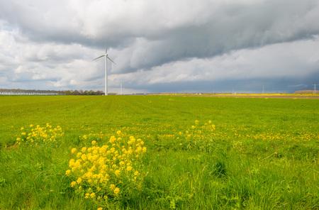 deteriorating: Meadow in deteriorating weather