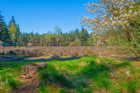 clearing: Clearing in a forest in spring Stock Photo