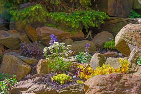 Flowers in a rockery garden in spring