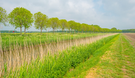 rural area: Canal meandering through a rural area in spring