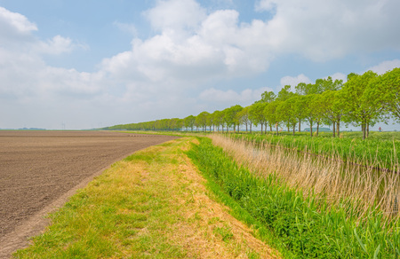 meandering: Canal meandering through a rural area in spring
