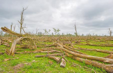 arboles secos: Árboles muertos en un humedal en primavera