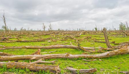 arboles secos: �rboles muertos en un humedal en primavera