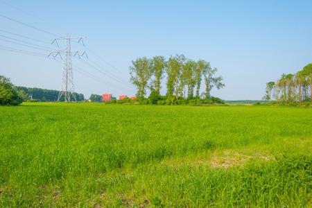 powerline: Powerline on a field in spring