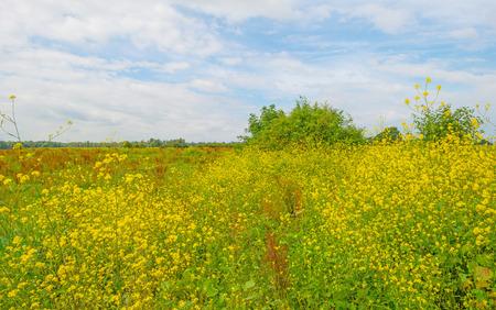 Wetland with wildflowers in summer