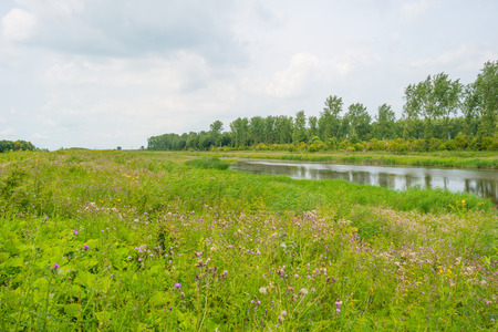 lelystad: The shore of a lake in summer