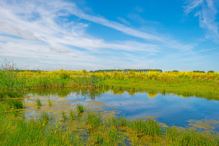lelystad: Wildflowers along the shore of a lake Stock Photo