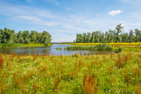 Wildflowers along the shore of a lake Stock Photo
