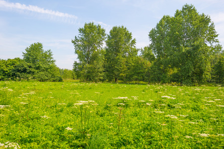 Trees and wildflowers in a meadow in summer