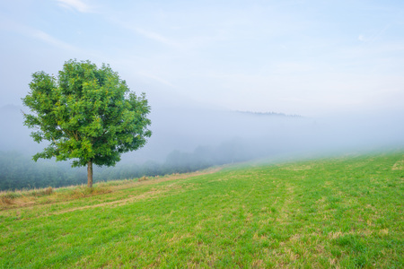 Fog in a hilly landscape at sunset Stock Photo