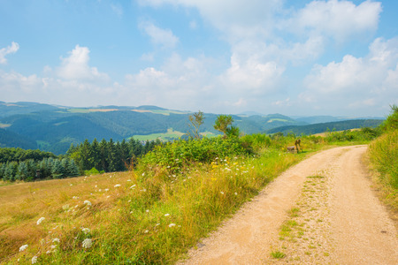 Hills of the Eifel National Park in summer