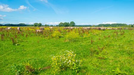 Horses in wetland in summer