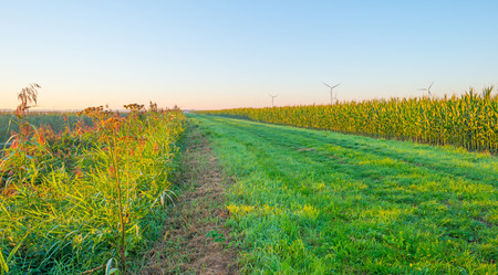 drove: Drove along a field at sunrise