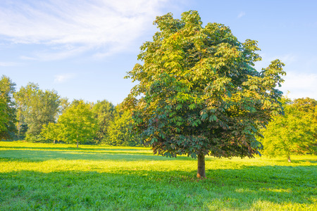 morning blue hour: Trees in a field at sunrise Stock Photo