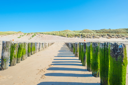 refelction: Sand dunes along a coast in summer