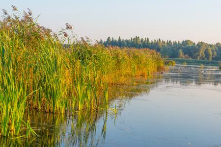 drove: Drove along a lake at sunrise in summer