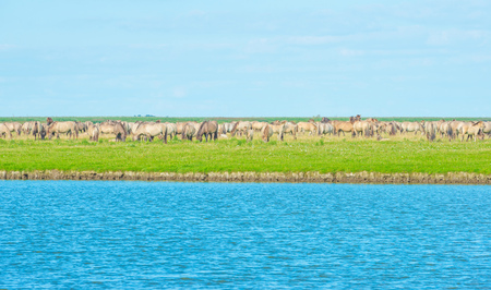 Horses along the shore of a lake in summer