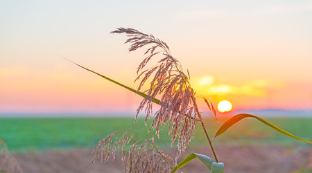 drove: Drove along a field at sunrise in autumn