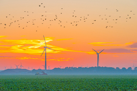 Wind turbines in a field at sunrise Stock Photo