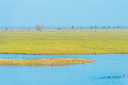 Birds along the shore of a lake