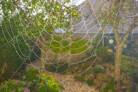 Cobweb in a garden at fall