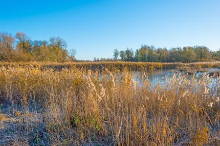 flevoland: Shore of a frozen lake in sunlight in autumn
