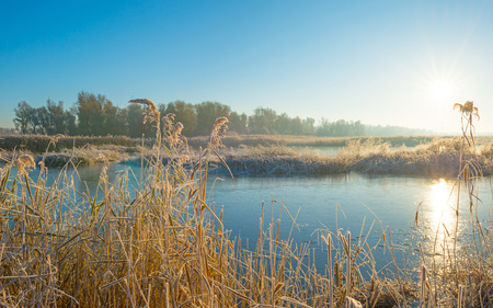 Shore of a frozen lake in sunlight in autumn