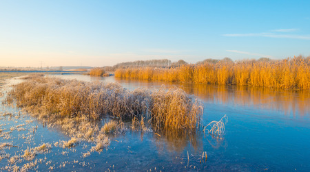 Shore of a frozen lake in sunlight in winter