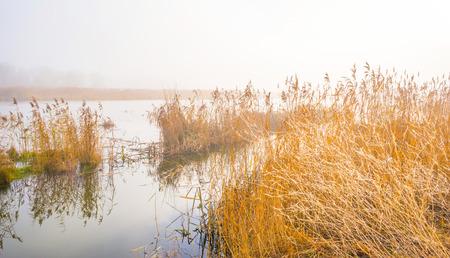 Foggy lake in winter Stock Photo