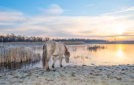 Horse in frozen wetland in sunlight Stock Photo