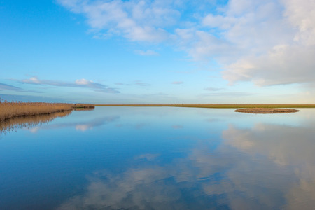 Shore of a lake in wetland in winter Stock Photo