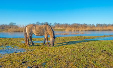 Horse along the shore of a frozen lake