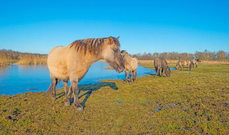 Horses along the shore of a frozen lake Stock Photo