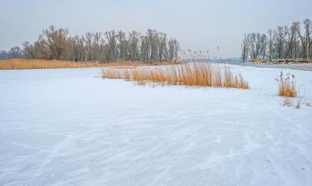 Shore of a frozen lake in winter