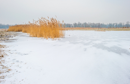Shore of a frozen lake in winter