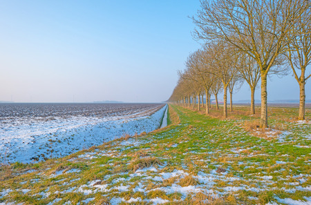 Frozen field in winter along a row of trees Stock Photo