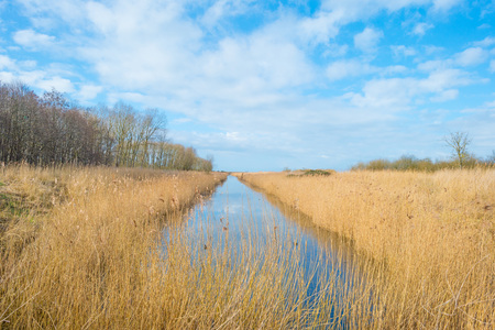 holland: Canal through a field in winter