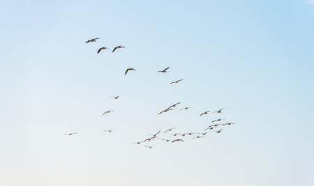 Birds flying in a blue cloudy sky in spring