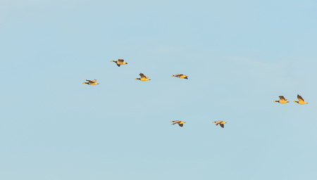 Birds flying in a blue sky in sunlight