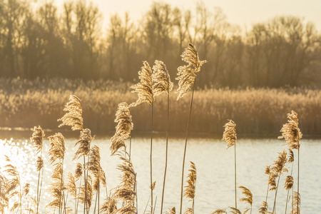 Shore of a lake in wetland at sunrise