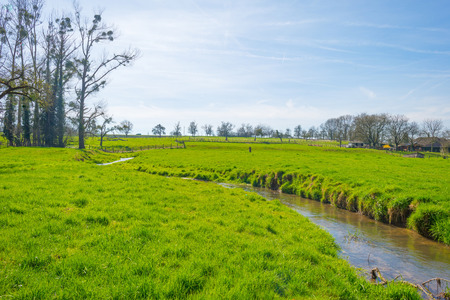 Stream flows through a meadow in spring