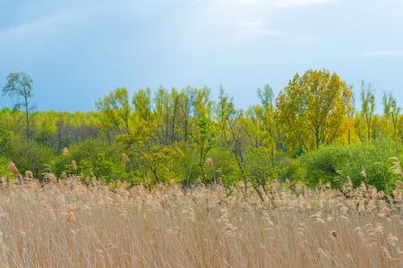 Trees along a field in spring in sunlight