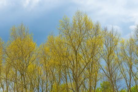 Dark clouds over trrees in sunlight