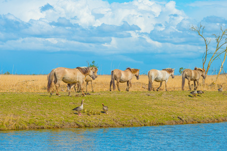 Horses along the shore of a lake in spring