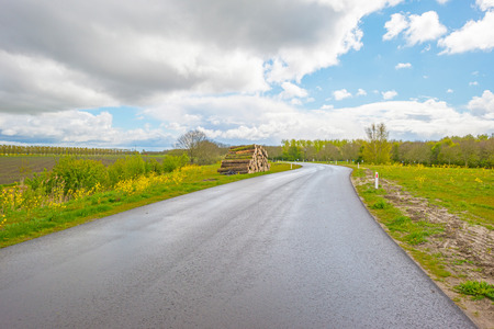 Road through the countryside in springtime
